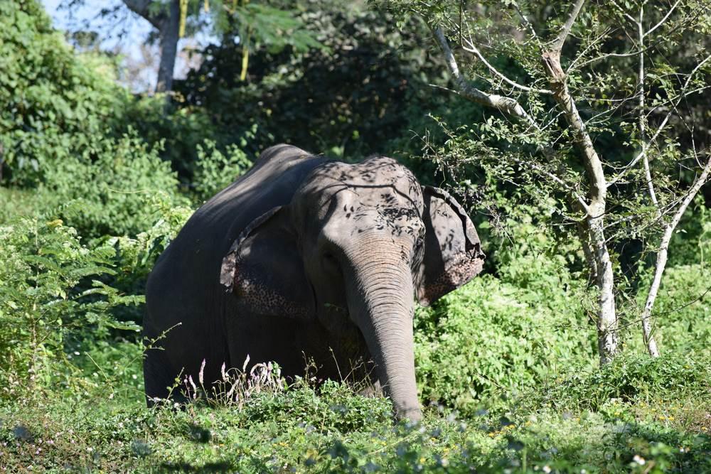 elefantes en libertad en Tailandia
