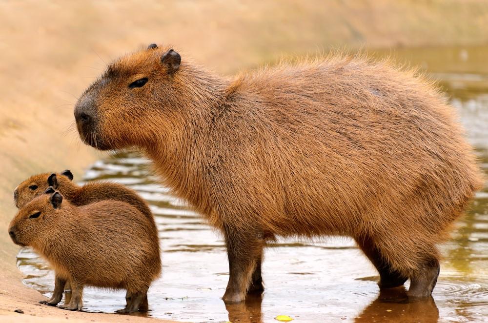 fauna de Paraguay