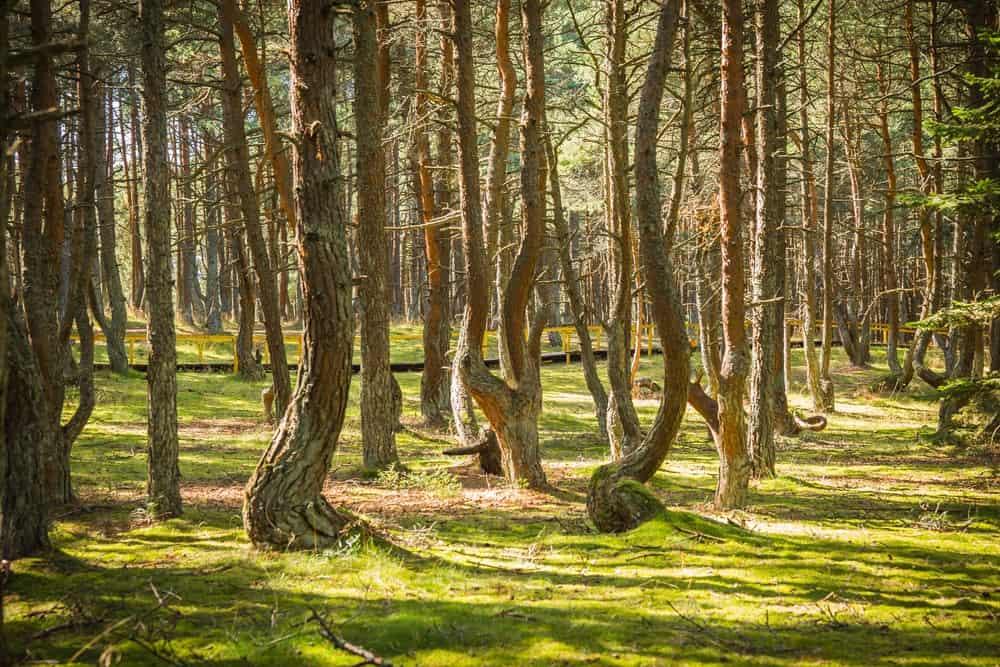 itinerario de viaje a Lituania de una semana