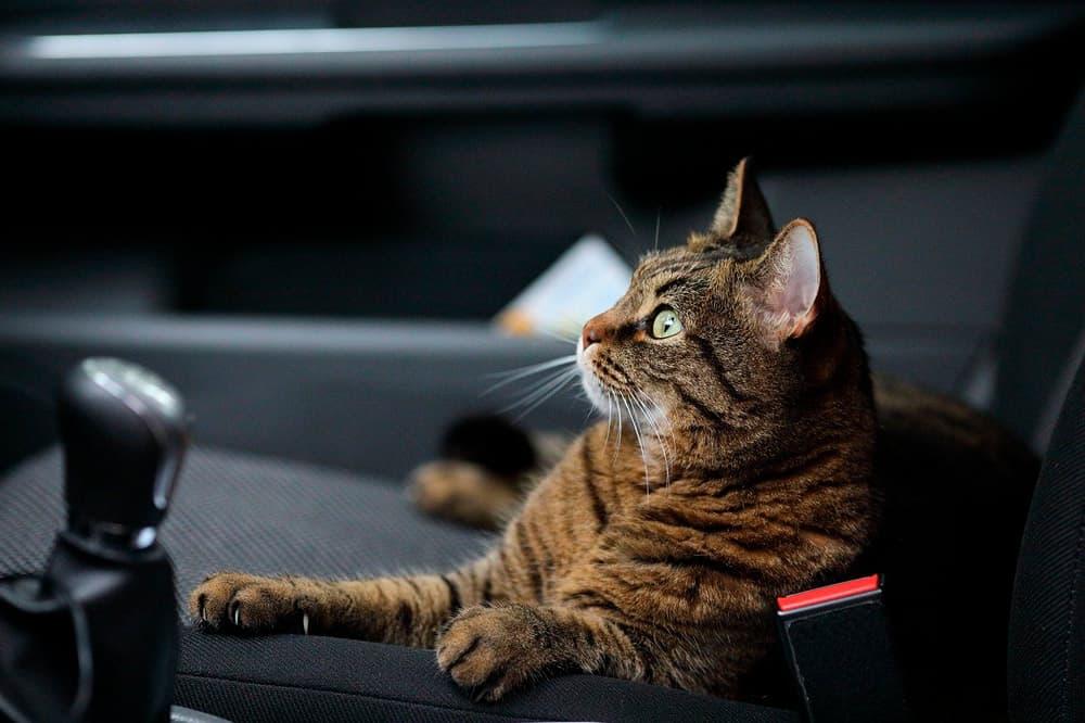 seguro para viajar con mascota