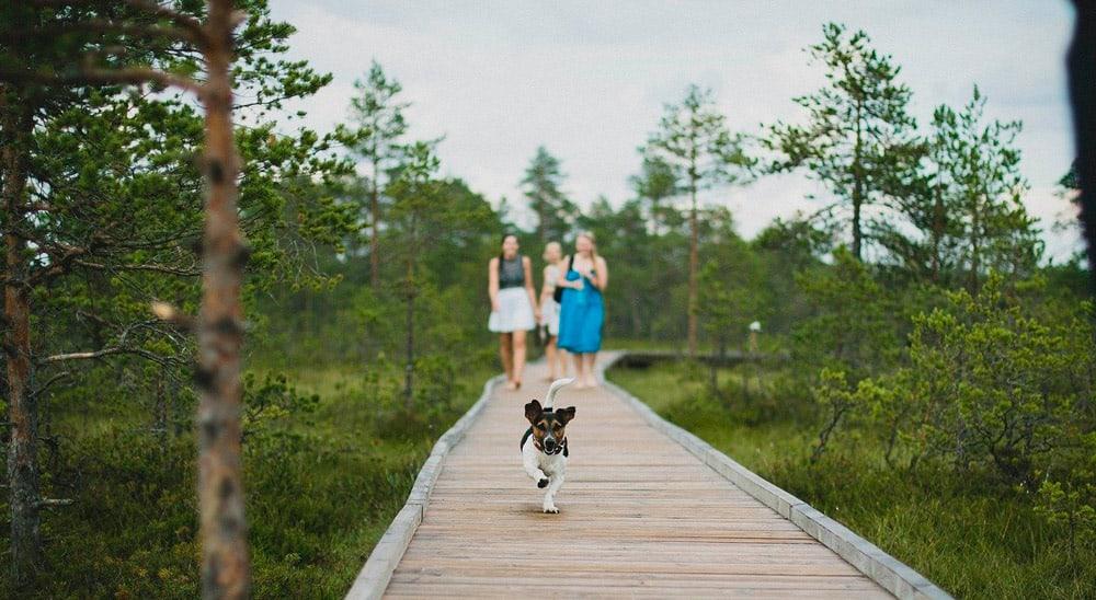 seguro de viaje para perro y gato