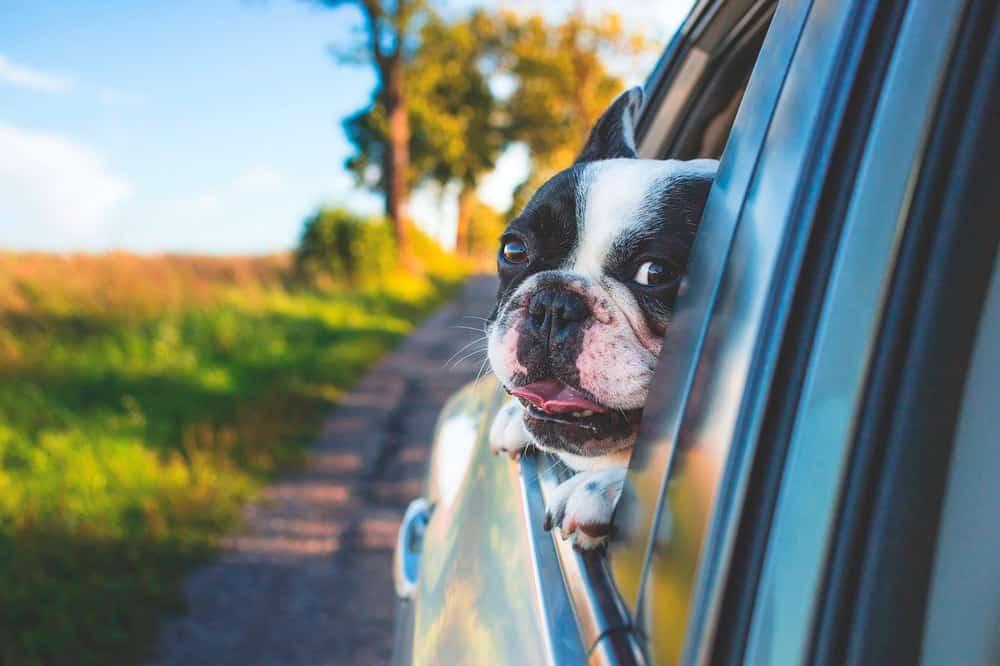seguro de viaje para mascota