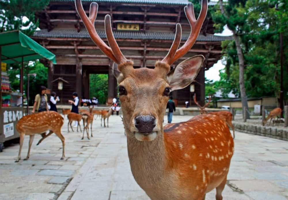 Que ver en Nara, Japón