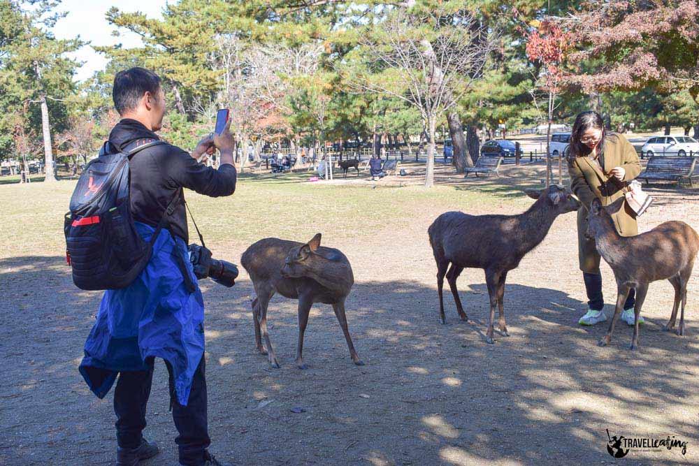 alimentar ciervos en Nara ¿Es responsable?