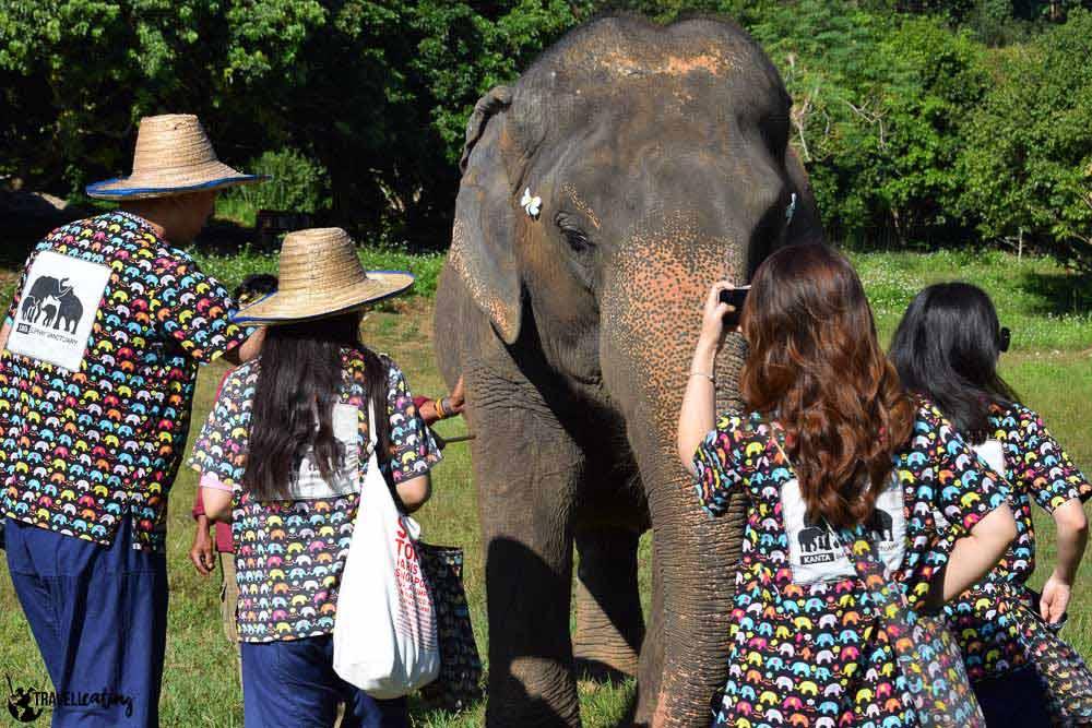elefantes en Tailandia, turismo responsable