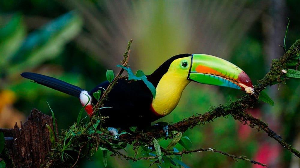 Documentos para viaje a Costa Rica
