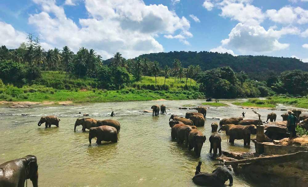 Seguro de viaje a Sri Lanka