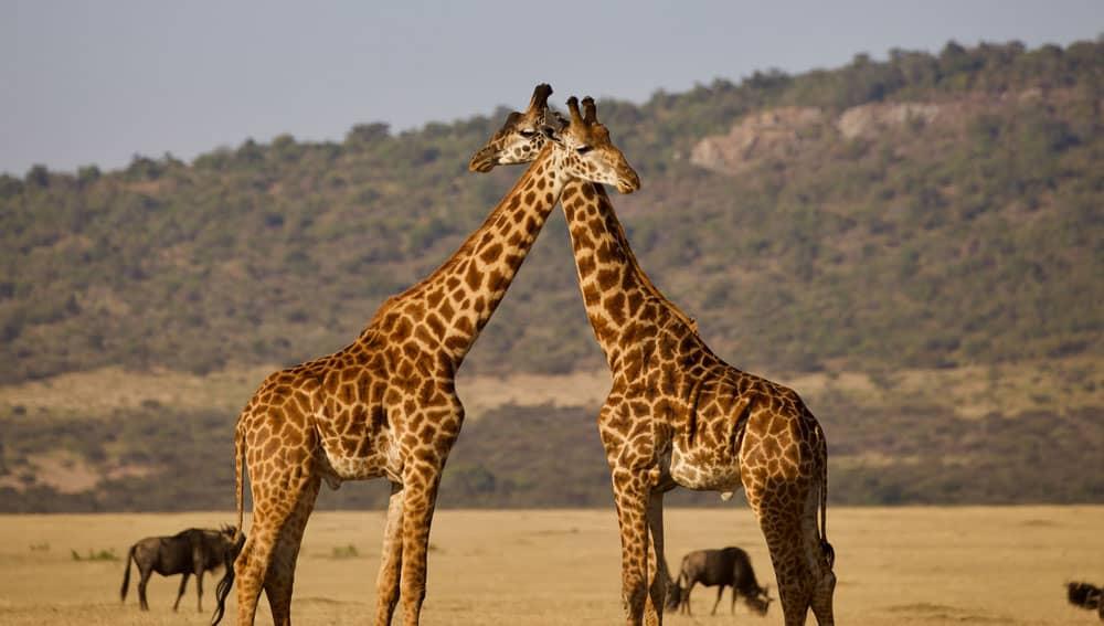 seguro para viajar a Tanzania