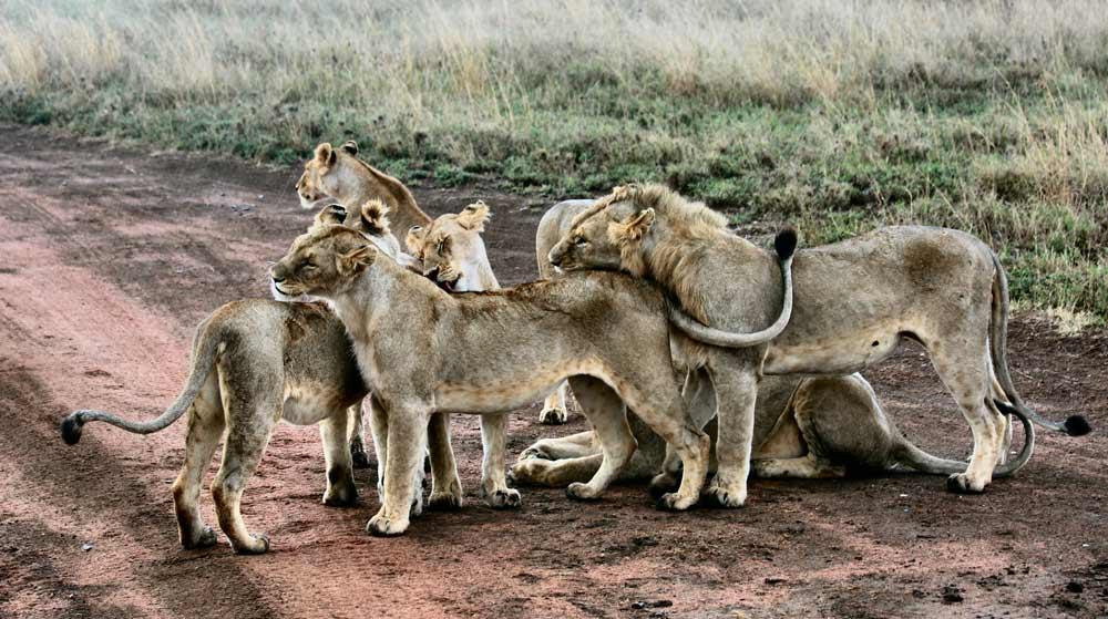 póliza para hacer un safari por África