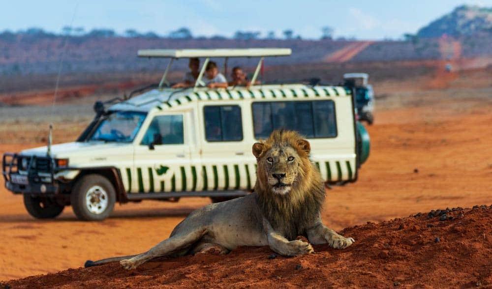 cobertura de accidentes en safari