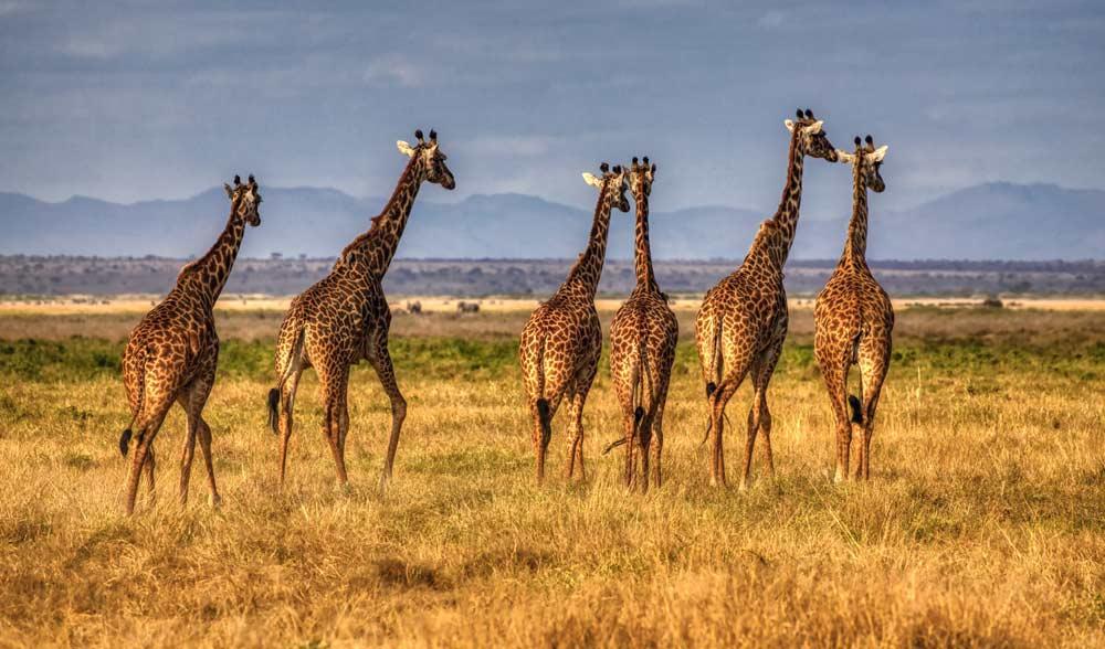 seguro para viajar a Kenia