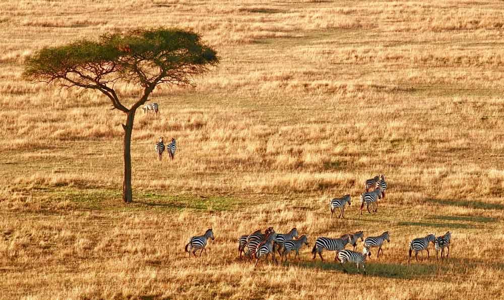 documentos para viaje a Tanzania