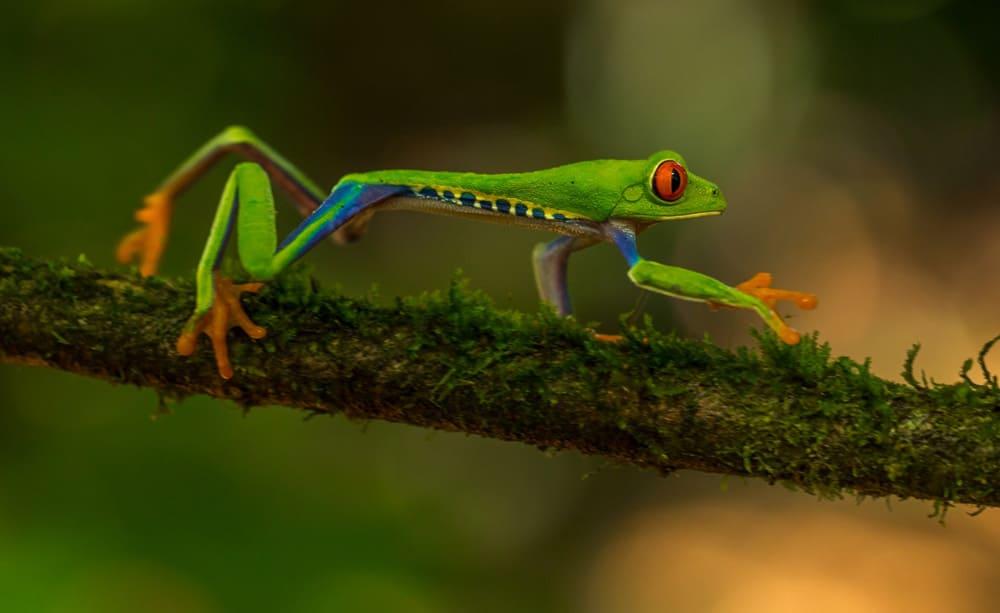consejos para viajar a Costa Rica
