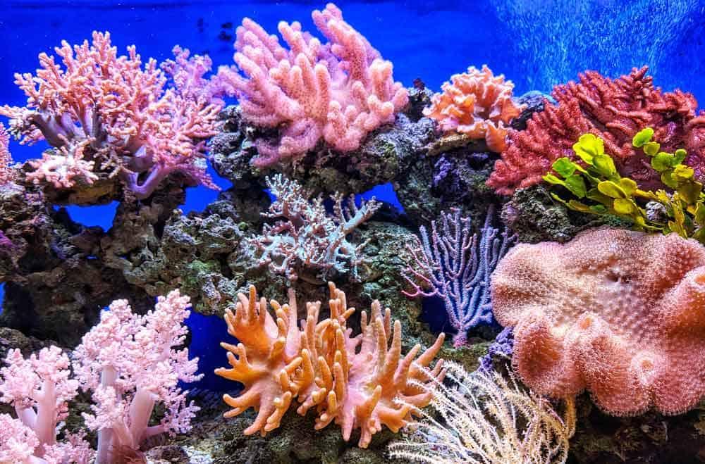 descubrir coloridos corales bajo el mar