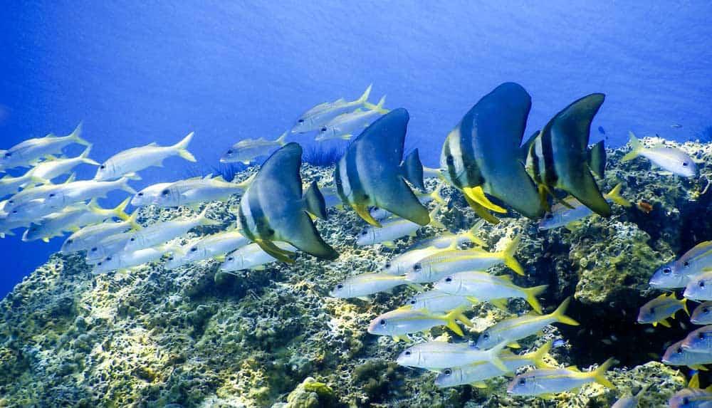 7. Snorkel y buceo en Phuket