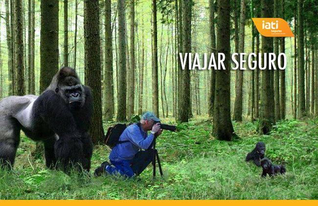 homem tira fotos a uns gorilas bebes