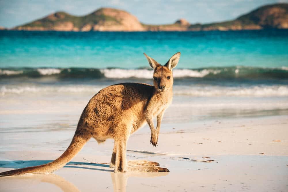 como conseguir o visto australiano