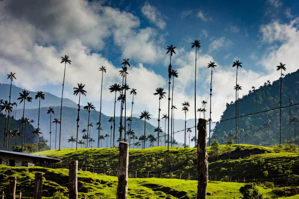 palmeiras no valle de cocora