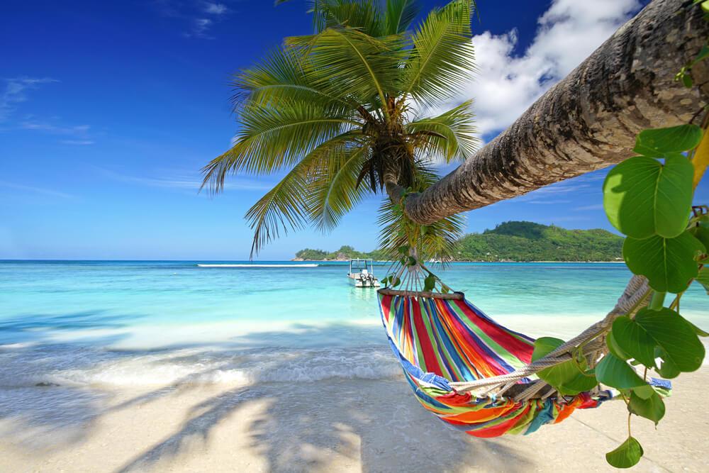 rede entre duas palmeiras nas seycheles