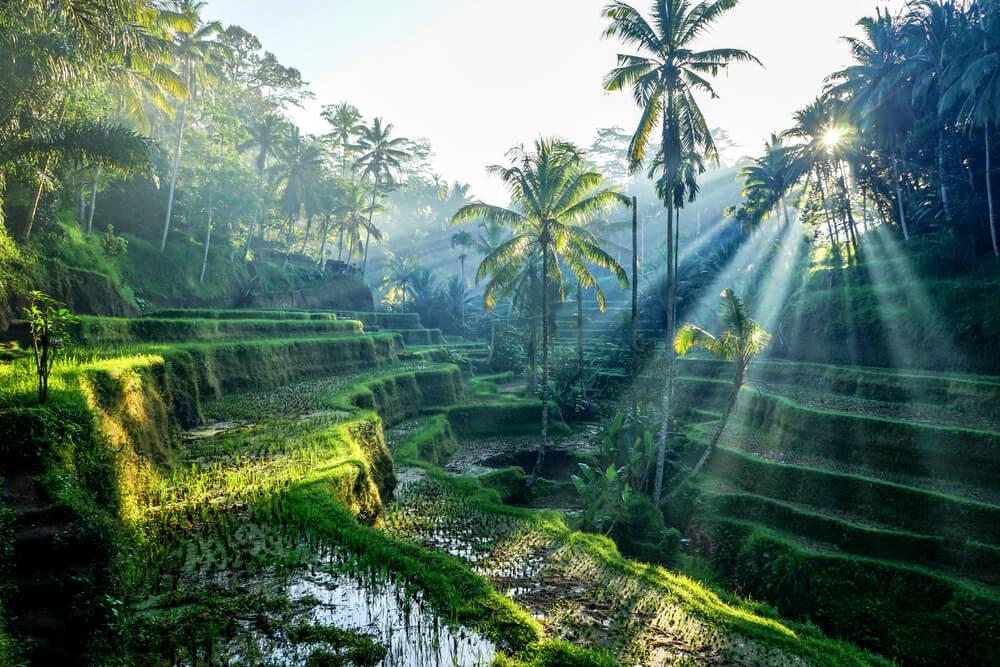 terraços de arroz em ubud