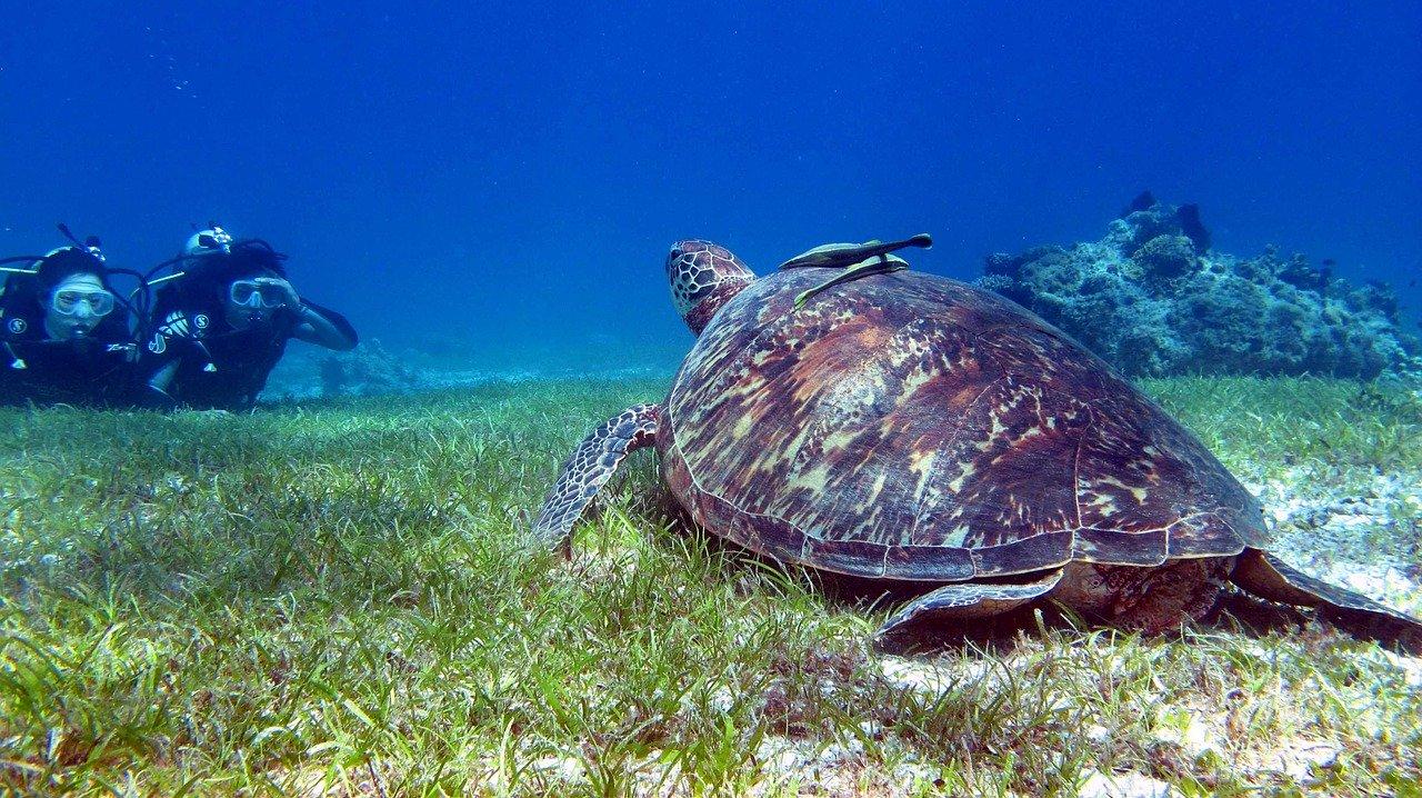 tartaruga num mergulho em bohol