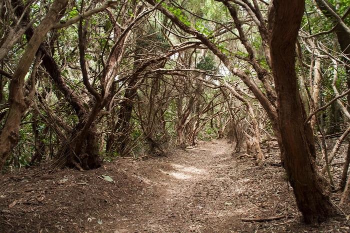 bosque encantado tenerife caminhadas