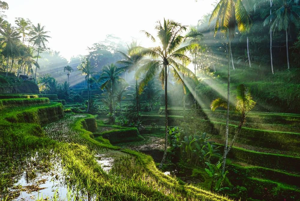 Terraços de Arroz em Ubud, Bali