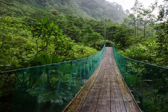 Ponte suspensa na floresta tropical.