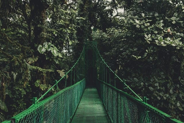 ponte suspensa na floresta costa rica