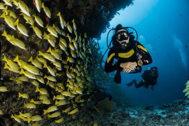 Mergulhadores pelo recife nas Maldivas