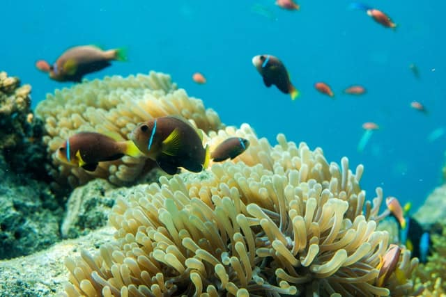 peixes no fundo mar nas maldivas