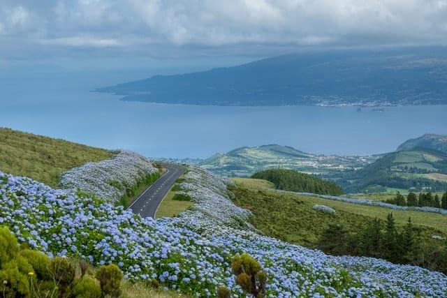 estrada com flores com vista para o oceano no fail no açores