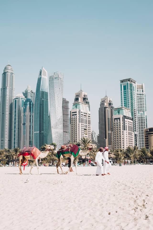 camelos no dubai