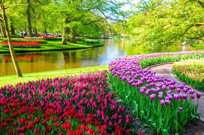 keukenhof tulpen holland tulpenwiese