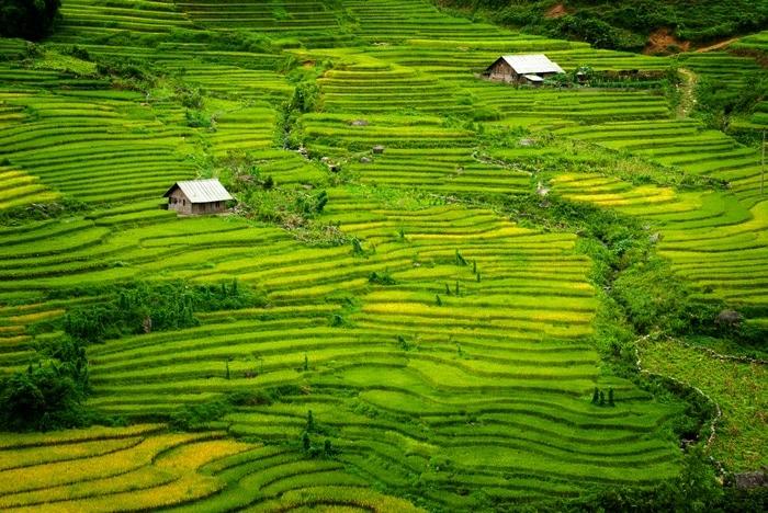 asien grün landschaft natur