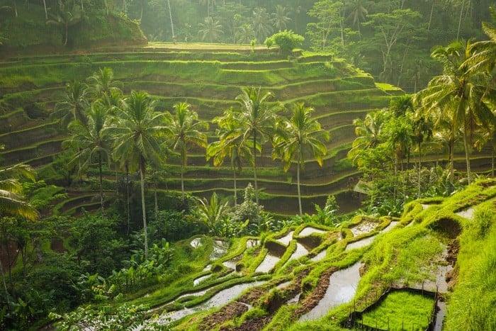 allein nach indonesien zu reisen