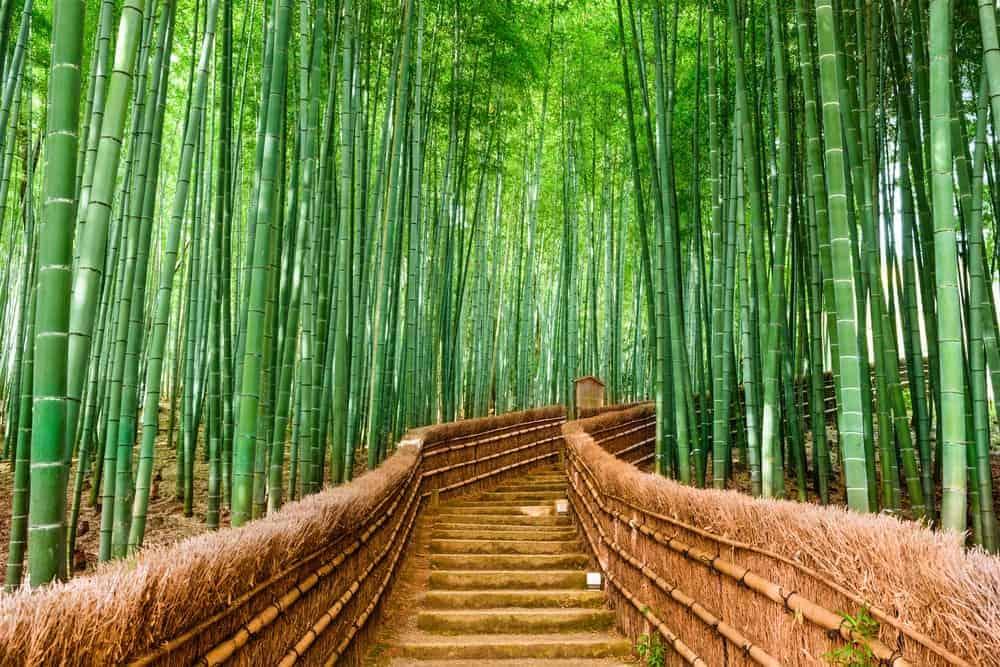 allein nach japan zu reisen