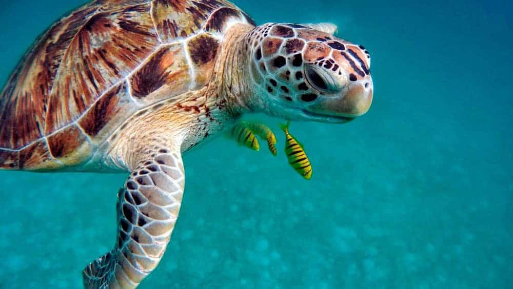 Allein auf die Malediven reisen
